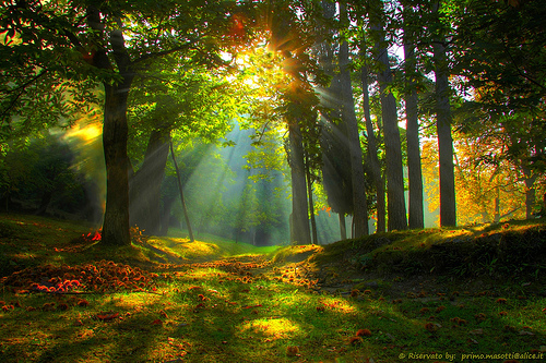 autumn-sunrise-in-the-forest-of-childhood